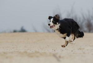learn photography dog running