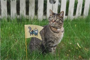 golden rectangle lines on image of cat