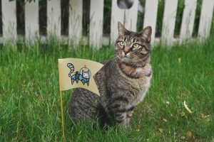 cat standing next to flag with cat