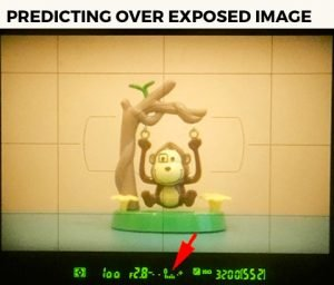 image of monkey showing DSLR camera meter to the right showing overexposed to learn metering modes in photography