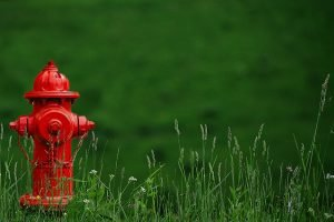 a fire hydrant in a grassy knoll