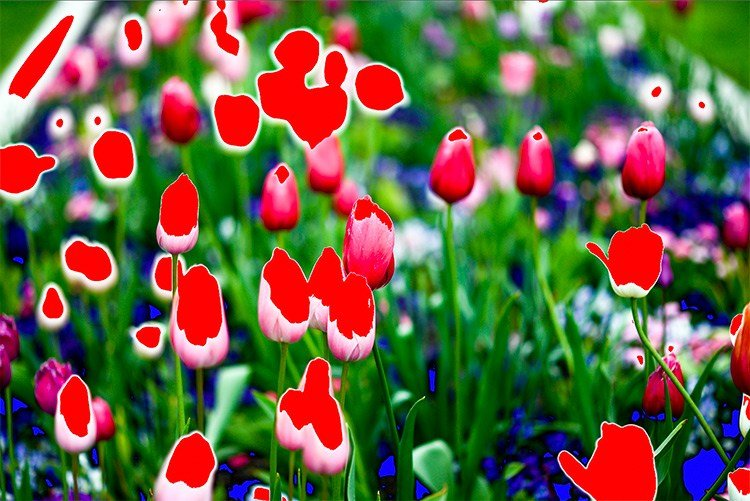 image of tulips with red clipping color on the flowers